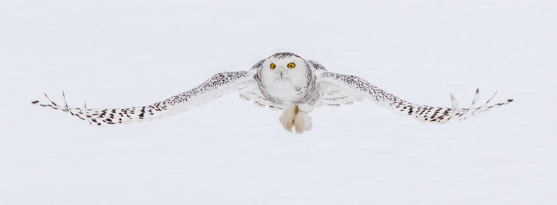 Snow Wraith By Bruce Hollingsworth