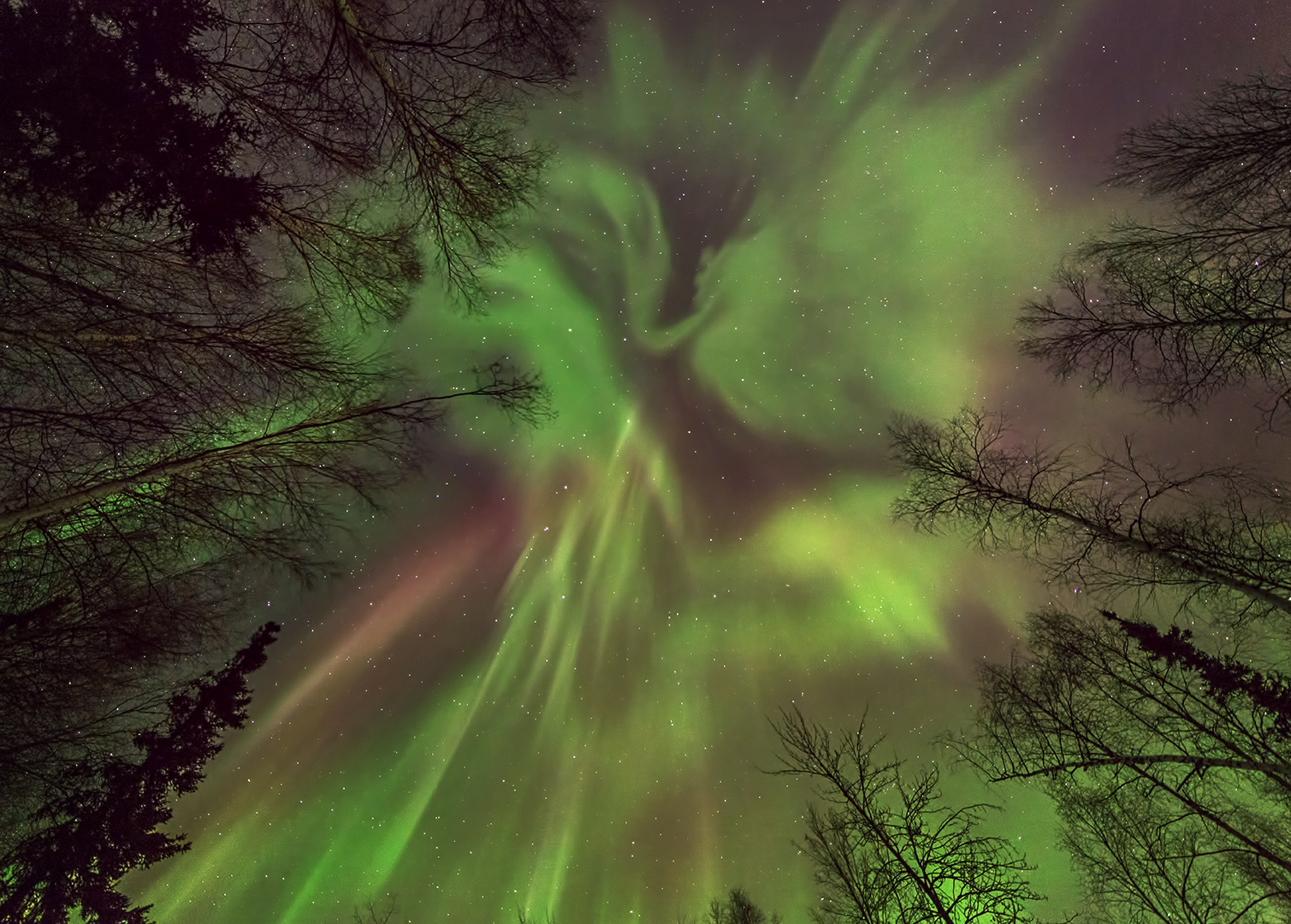 Coronal Aurora Overhead By Les Anderson