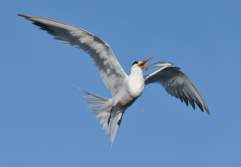 Fish Tossing in Flight by Mike Wilson
