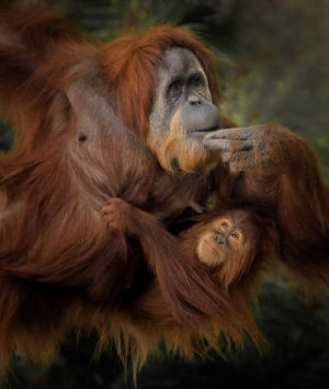 Aisha And Mom By Robin Stern