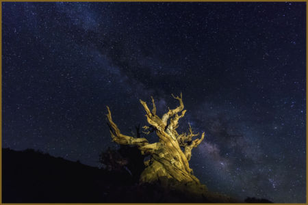 Milky Way & Tree By Carol Murdock