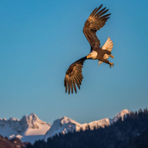 Soaring The Peaks by Bruce Hollingsworth