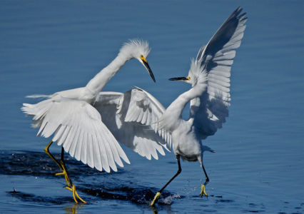 Two Birds Only One Bay by Dennis Morrison
